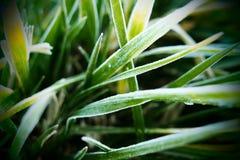 Grönt gräs och frysadimma royaltyfri fotografi