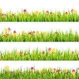 Grönt gräs och härliga vårblommor. EPS 10 Arkivbild