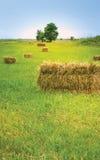 Grönt gräs och hö royaltyfri foto