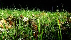 Grönt gräs och höstsidor Fotografering för Bildbyråer