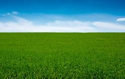 Grönt gräs och himmel, bakgrund arkivbild