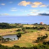 Grönt gräs och karibiskt hav Fotografering för Bildbyråer