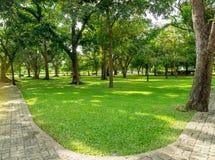 Grönt gräs och många av träd i det offentligt parkerar i Thailand Arkivfoto