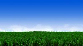 Grönt gräs och molnig himmel Royaltyfri Fotografi