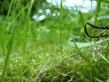 Grönt gräs och Moss Close Up Macro Detail Arkivfoton