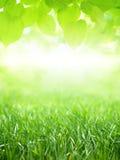 Grönt gräs och sidor royaltyfri bild