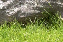Grönt gräs och sten Royaltyfria Bilder