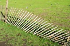 Grönt gräs och stupat staket arkivfoto