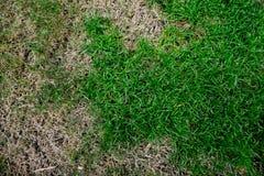 Grönt gräs och torrt gräs Royaltyfri Fotografi