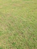 Grönt gräs och torrt gräs Arkivfoto
