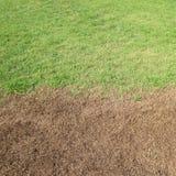 Grönt gräs och torrt gräs Arkivbilder