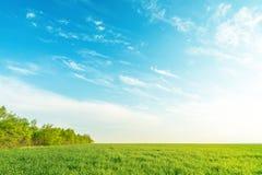 Grönt gräs och träd under blå himmel i solnedgång arkivfoto