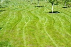 Grönt gräs och unga unga träd Arkivfoto