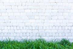 Grönt gräs och vitvägg royaltyfri foto