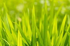 Grönt gräs om den soliga dagen, abstrakt ekologisk bakgrund royaltyfria bilder