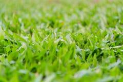 Grönt gräs på ängen royaltyfri foto