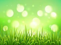Grönt gräs på bakgrund för ljus effekt för bokeh Fotografering för Bildbyråer