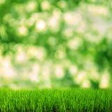 Grönt gräs på den gröna bakgrunden Royaltyfria Bilder