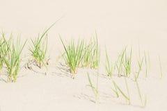 Grönt gräs på den vita sanden Fotografering för Bildbyråer