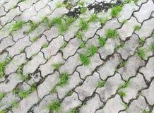 Grönt gräs på det konkreta kvarteret Arkivfoto