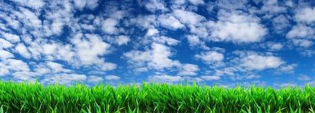 grönt gräs på en bakgrund av blå himmel med vita moln Royaltyfria Bilder
