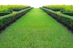 Grönt gräs på en bana Royaltyfria Foton