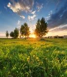 Grönt gräs på en härlig solnedgång för bakgrund Arkivbilder