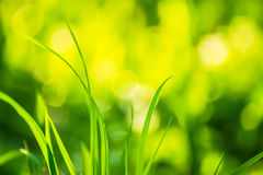 Grönt gräs på en ljus solig naturlig grön bakgrund Royaltyfria Foton