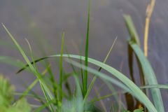Grönt gräs på ett fält i Bayern royaltyfri fotografi