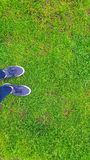 Grönt gräs på ett fotbollfält royaltyfri foto