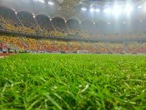 Grönt gräs på fotbollsarena Royaltyfri Bild