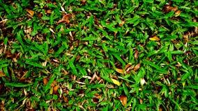 Grönt gräs på gården Arkivfoto