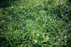 Grönt gräs på grön bakgrund Royaltyfria Bilder