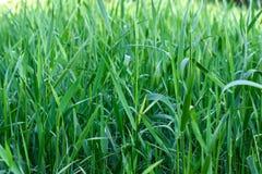 Grönt gräs på grön bakgrund Arkivbild