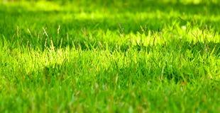 Grönt gräs på morgon arkivbilder