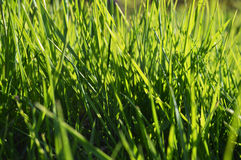 Grönt gräs på solig dag Royaltyfria Foton