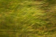 Grönt gräs på sommarbakgrund eller textur arkivbild