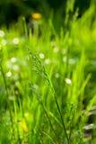 Grönt gräs på sommartiden Arkivbild