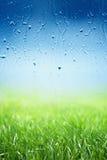 Grönt gräs, regnig dag Royaltyfri Bild