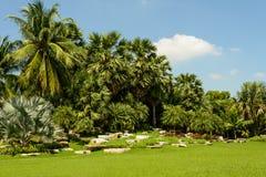 Grönt gräs sätter in Arkivfoton