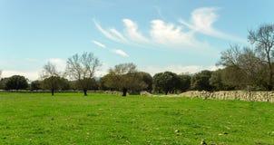 Field landskap royaltyfria bilder