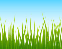 Grönt gräs, sömlös bakgrund för blå himmel royaltyfri illustrationer