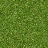 Grönt gräs. Sömlös Tileable textur. Royaltyfria Foton