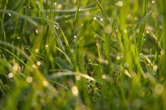 Grönt gräs som täckas med dagg Fotografering för Bildbyråer