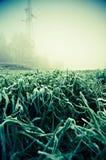 Grönt gräs som täckas med första jordfrost i höst Vintern är kommande på äng Royaltyfri Bild