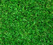 Grönt gräs texturerar royaltyfri bild