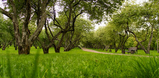 Grönt gräs, trädäpplebuskar arkivfoton