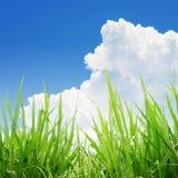 Grönt gräs under blå himmel Royaltyfria Bilder
