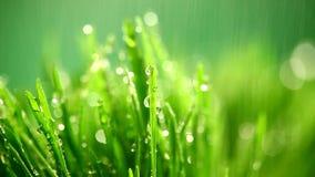Grönt gräs under regnet arkivfilmer