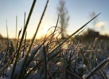 grönt gräs under snö arkivbild